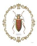 Adorning Coleoptera VI