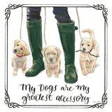 Furry Fashion Friends I My Dogs