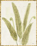 Forest Ferns II v2 Antique