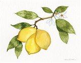Citrus Garden I