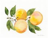 Citrus Garden III