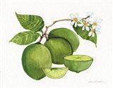 Citrus Garden IV