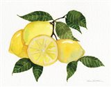 Citrus Garden VI