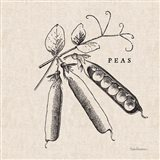 Burlap Vegetable BW Sketch Peas