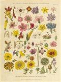Herbal Botanical XI
