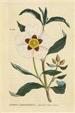 Herbal Botanical XXVII