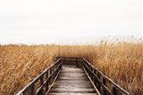 Fall Walk III