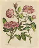 Herbal Botany XVIII v2 Crop