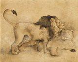 Global Lions Light Crop