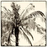 Palm Tree Sepia III