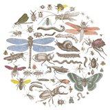 Insect Circle I Bright