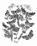 Butterfly Bouquet IV Linen BW IV