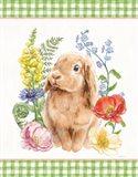 Sunny Bunny I Checker Border