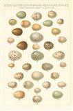 Songbird Egg Chart