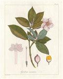 Botanical Gardenia v2