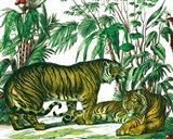 Jungle Flair V