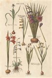 Vintage Florilegium III