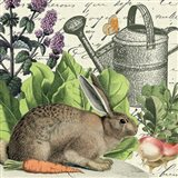 Garden Rabbit I