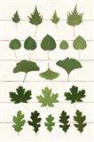 Leaf Chart I Shiplap