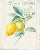 Floursack Lemon II v2