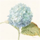 Floursack Florals V - Blue Hydrangea Crop