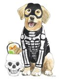 Halloween Pets VII