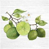 Citrus Garden VII Shiplap