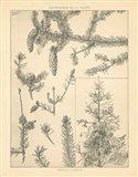 Vintage Tree Sketches I