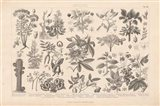 Botanik I Vintage