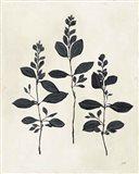 Botanical Study IV