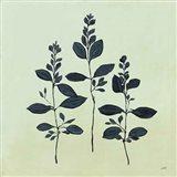 Botanical Study IV Sage
