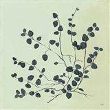 Botanical Study VII Sage