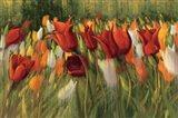 Tipsy Tulips
