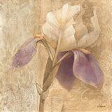 Brocade Iris