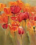 Tulips in the Midst I