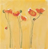 Cadmium Orange Poppies