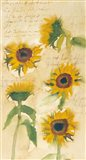 Sunflowers on Script