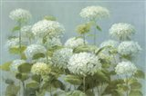 White Hydrangea Garden