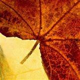 When Autumn Slides Into Winter