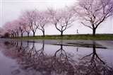 Rain of Spring