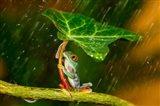 Ohh Noo It's Raining