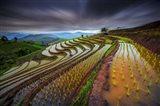 Unseen Rice Field