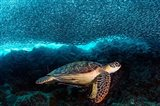 Turtle And Sardines