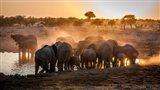 Elephant Huddle