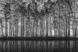 Pointillism Nature