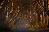 The Dark Hedges In the Morning Sunshine