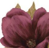 Grandiflora Blush II