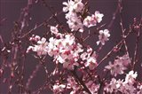 Spring Blossom - Purple