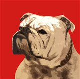 The British Bulldog, Red