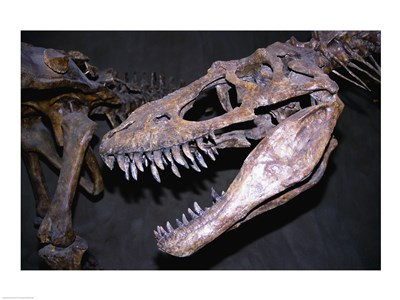 Albertosaurus, Royal Tyrrell Museum, Drumheller, Alberta, Canada Poster by Unknown for $63.75 CAD